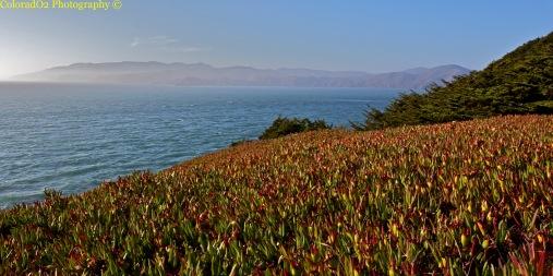 San Francisco Paradise
