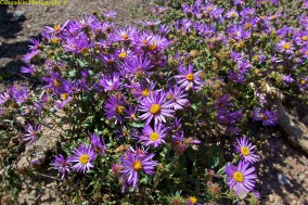Wildflowers near Longs Peak Trailhead!